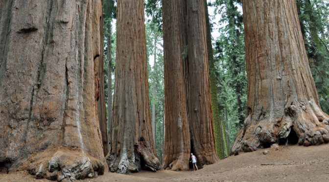 The 411 on Sequoia National Park with Kids