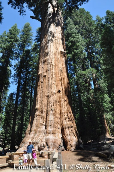 The General Sherman tree at Sequoia National Park.