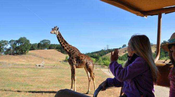 On Safari in Sonoma: Our Tour of Safari West Wildlife Preserve