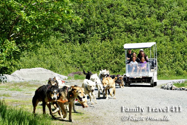 Taking a ride with Temsco Sled Dog summer camp in Juneau, Alaska.