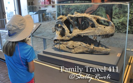 Visitors get a close-up view of the skull of an Allosaurus retrieved from the quarry.