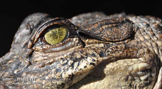 Ziplining Louisiana Style with Gators & Friends