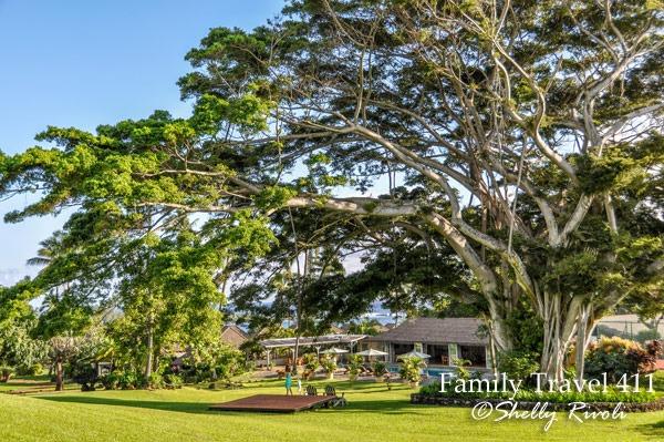 Banyan tree at Travaasa Hana resort in Maui