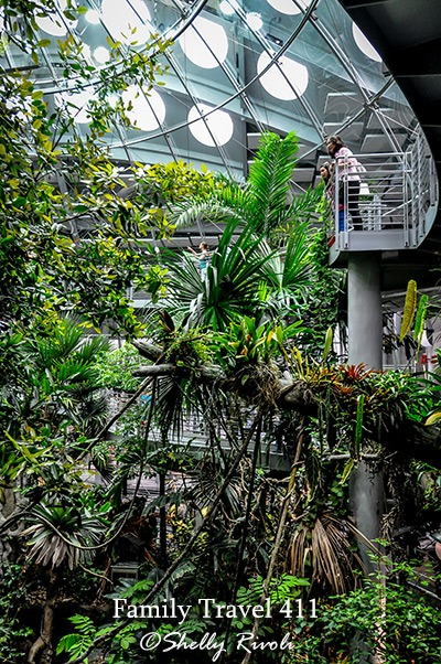 rainforest at the Cal Academy of Sciences.