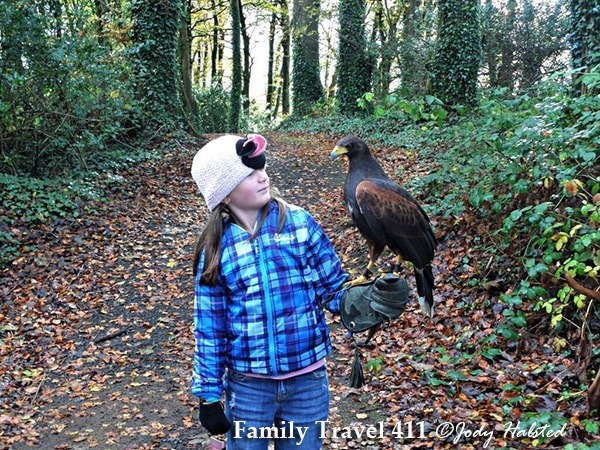 Killarney Falconry hawk walk