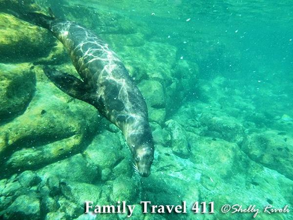 snorkel with sea lions at Los Islotes