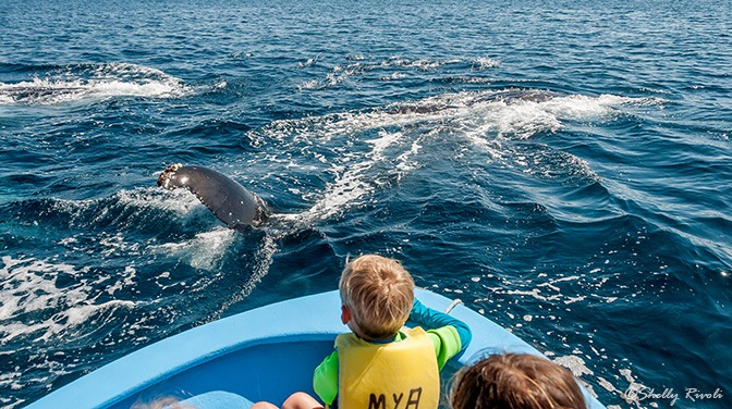 The kids watch humpback whales feeding right beside our boat