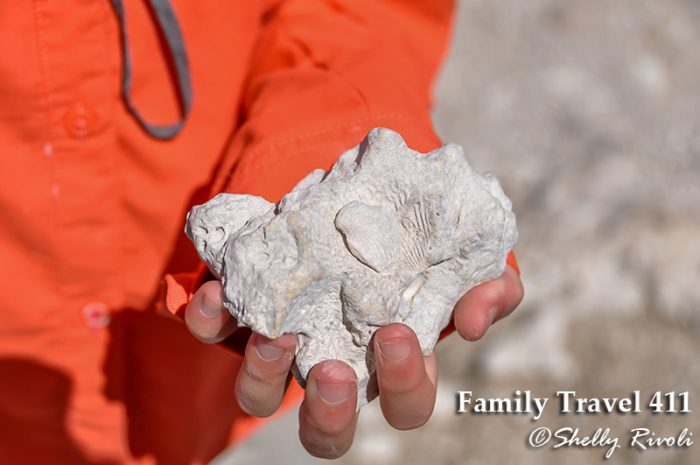 Fossils are easily found in parts of Big Cypress National Preserve.