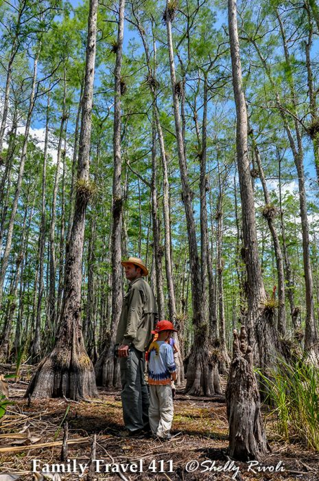 Exploring among the pond cypress in Big Cypress National Preserve