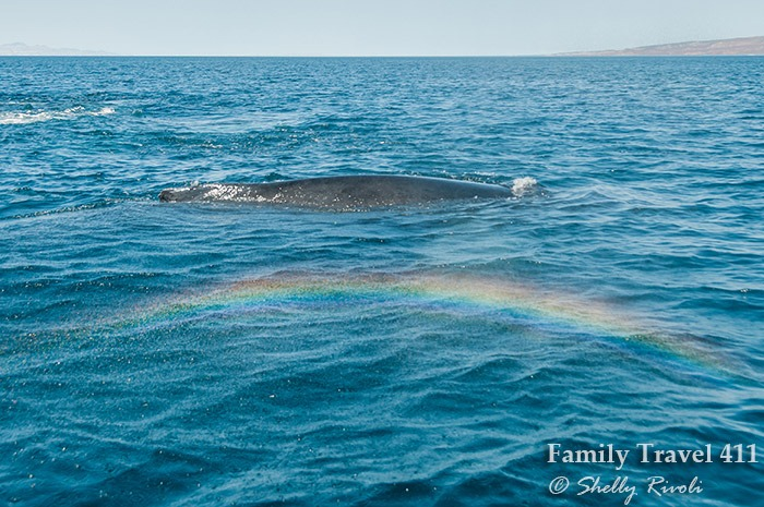 Rainbow made from mist of whale spray on the Sea of Cortez