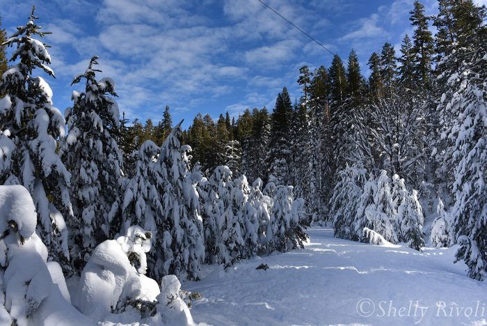 Snow already melts from the tallest trees touched by the sun
