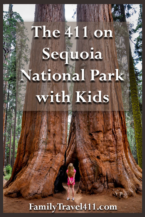 girl looking up at giant redwoods sequoia trees