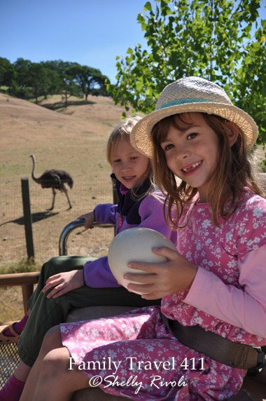 Child passenger holds ostrich egg on top of safari jeep at Safari West