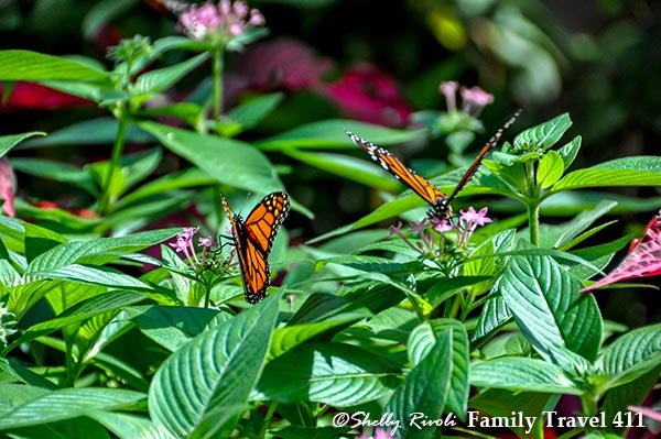 Butterflies at Huntsville Botanical Garden