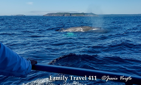 Whale-watching off the coast of Newfounland with kids.