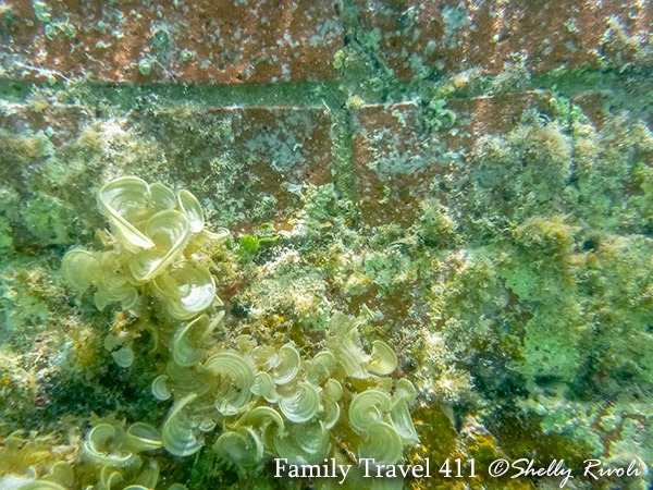 coral growing on Fort Jefferson at Dry Tortugas