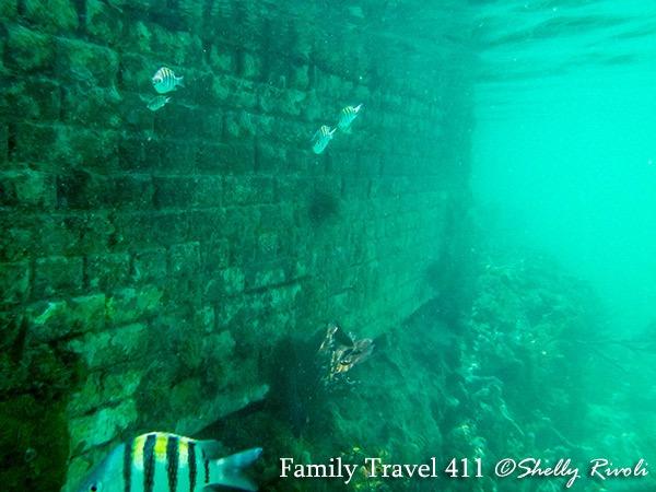 Dry-Tortugas-underwater-fish