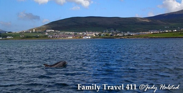 Dingle's most famous resident, Fungi the Dolphin.
