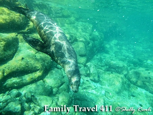 snorkel with sea lions at Los Islotes