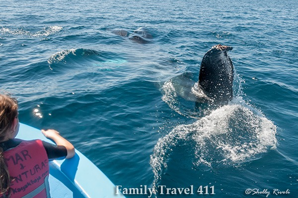 kids watch humpback whale feeding in Sea of Cortez