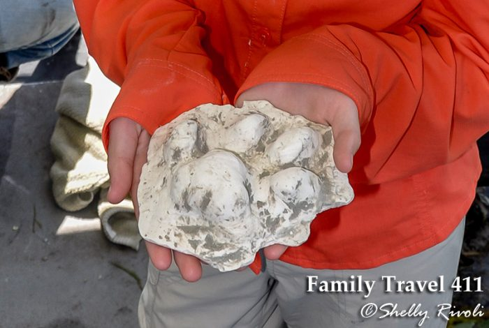 One of the treasured plaster-cast panther tracks from our visit to Big Cypress National Preserve.