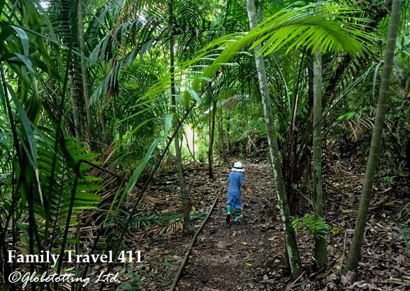 Escape to the rainforest--right at the heart of Panama City.