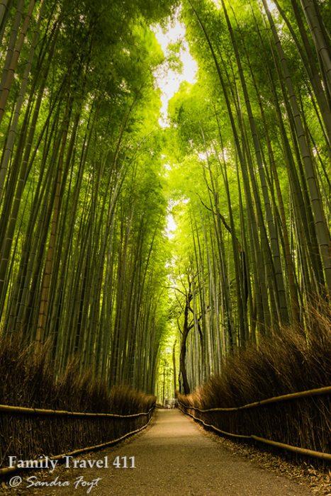 Arashiyama's Bamboo Grove.