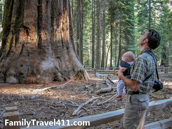 """Getting a load of the """"Grizzly Giant"""" at Mariposa Grove."""