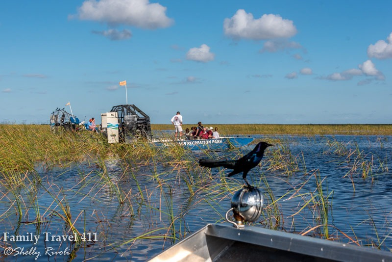 airboats in the Everglades with passengers, tourists, a bird