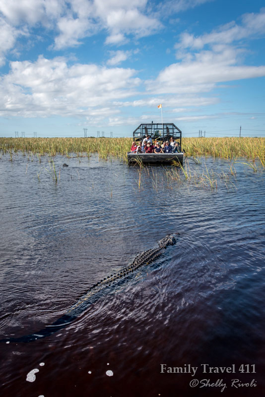 A curious alligator--or two--close in on an airboat but only pass by...