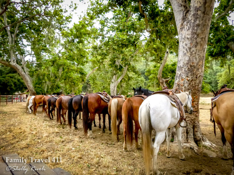 row of horse's behinds lined up beneath trees